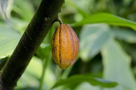 気にぶら下がって実っているオレンジ色の木の実