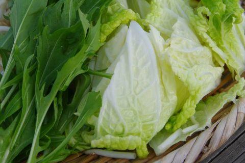 お鍋の材料にも使われる水菜