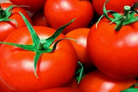 トマト缶に使われるトマト