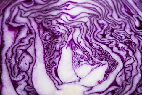 中まで紫色の紫キャベツを真っ二つにしたところ