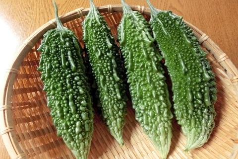 にがうり、ゴーヤーと呼ばれる瓜